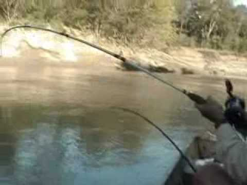 Rod And Reel Gator Gar Fishing  #02