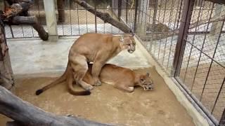 他の動物と動物交配:犬の交配面白いコンパイルビデオでスーパーキャット