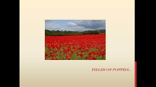 Remembrance Song: Fields of poppies