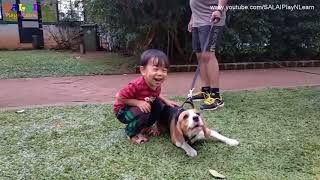 Toddler Learning Video   SALAI LOVES ANIMALS  2-3 year old Toddler Fun activity