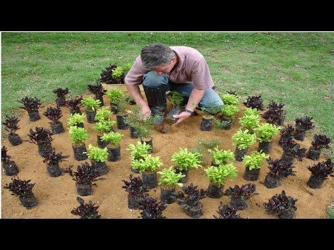 Curso Como Montar uma Empresa de Manuten��o de Jardins - Tratos Culturais - Cursos CPT