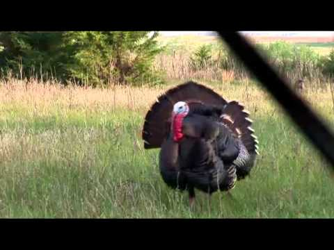 Double Turkey Decapitation With One Arrow (Must See)