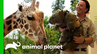 Meet The Mischievous Animals of Australia Zoo!