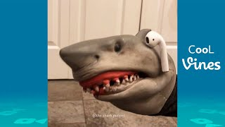 Try Not To Laugh Challenge - Funny Shark Puppet Instagram Videos 2020