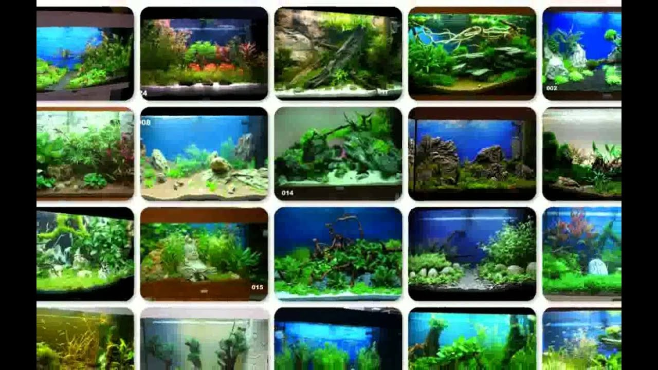 aquarium dekorieren tipps ideen youtube. Black Bedroom Furniture Sets. Home Design Ideas