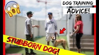How to train a stubborn dog! PitBull Training with Americas Canine Educator