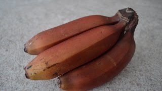 How to Prepare & Eat Red Bananas: Cooking with Kimberly