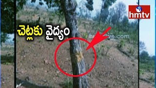 చెట్లకు వైద్యం చేస్తున్న అధికారి !! | Treatment For Trees | Asifabad | hmtv