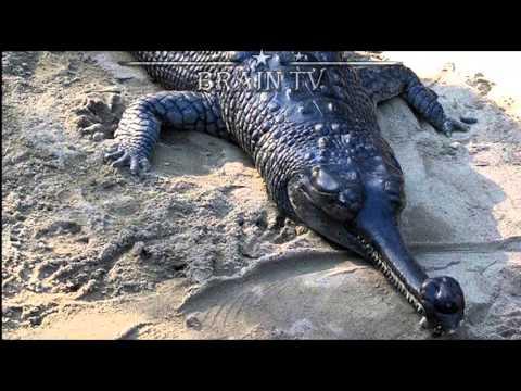 ТОП 10 Редких и удивительных животных с неземной внешностью. От BRAIN TV.