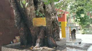 CHAURA DEVI MATA  (Hamirpur)