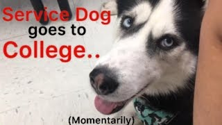 Service dog goes to college for a day!