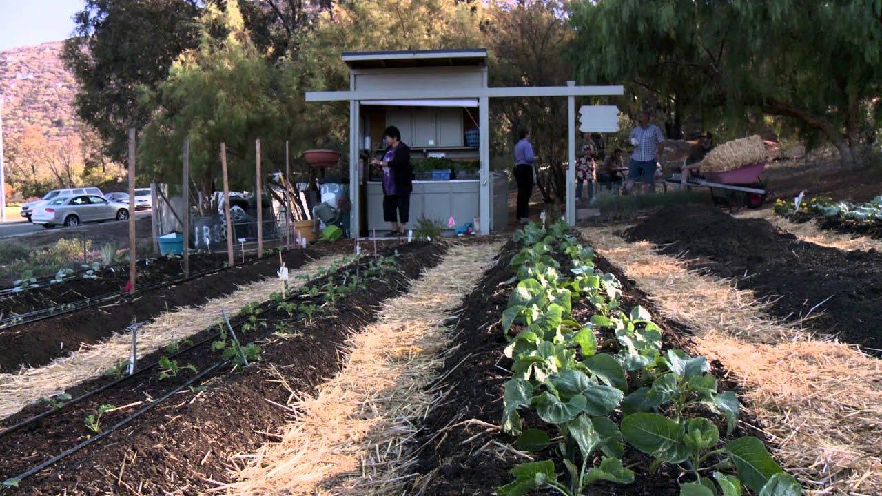 backyard produce project youtube
