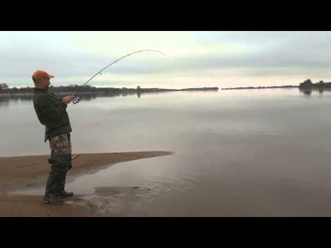 рыбалка видео желтощек