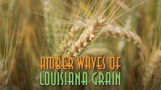 Amber Waves of Louisiana Grain