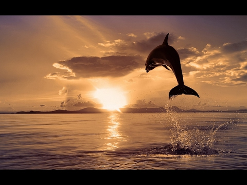 PISCES *FEBRUARY 2017*Clairvoyant Alchemy* CREATIVE INTUITIVE EXPRESSIONS* IT'S TIME TO FLOW & FLY *