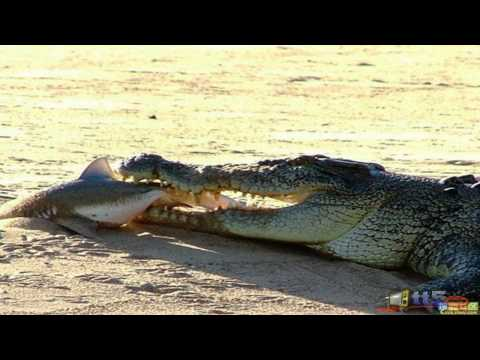 Tourist dies after shark attack in Hawaii