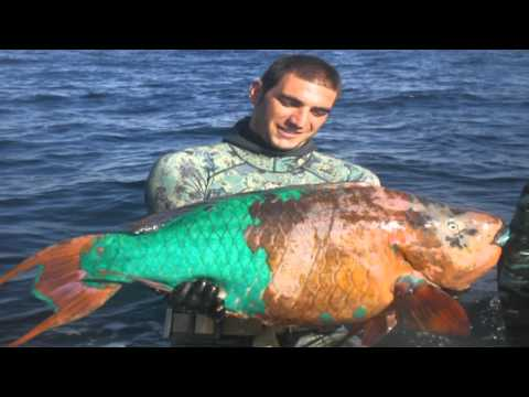 Venezuela 2008 spearfishing championship, part 3