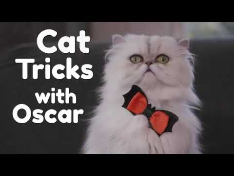 Cat Tricks with Oscar
