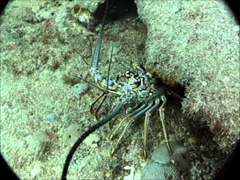 Clayton's first Caribbean dive/ St Maarten.wmv