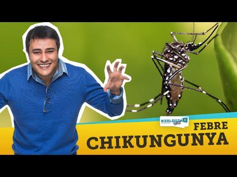 Febre Chikungunya: A Nova Epidemia do Brasil - Prof. Paulo Jubilut