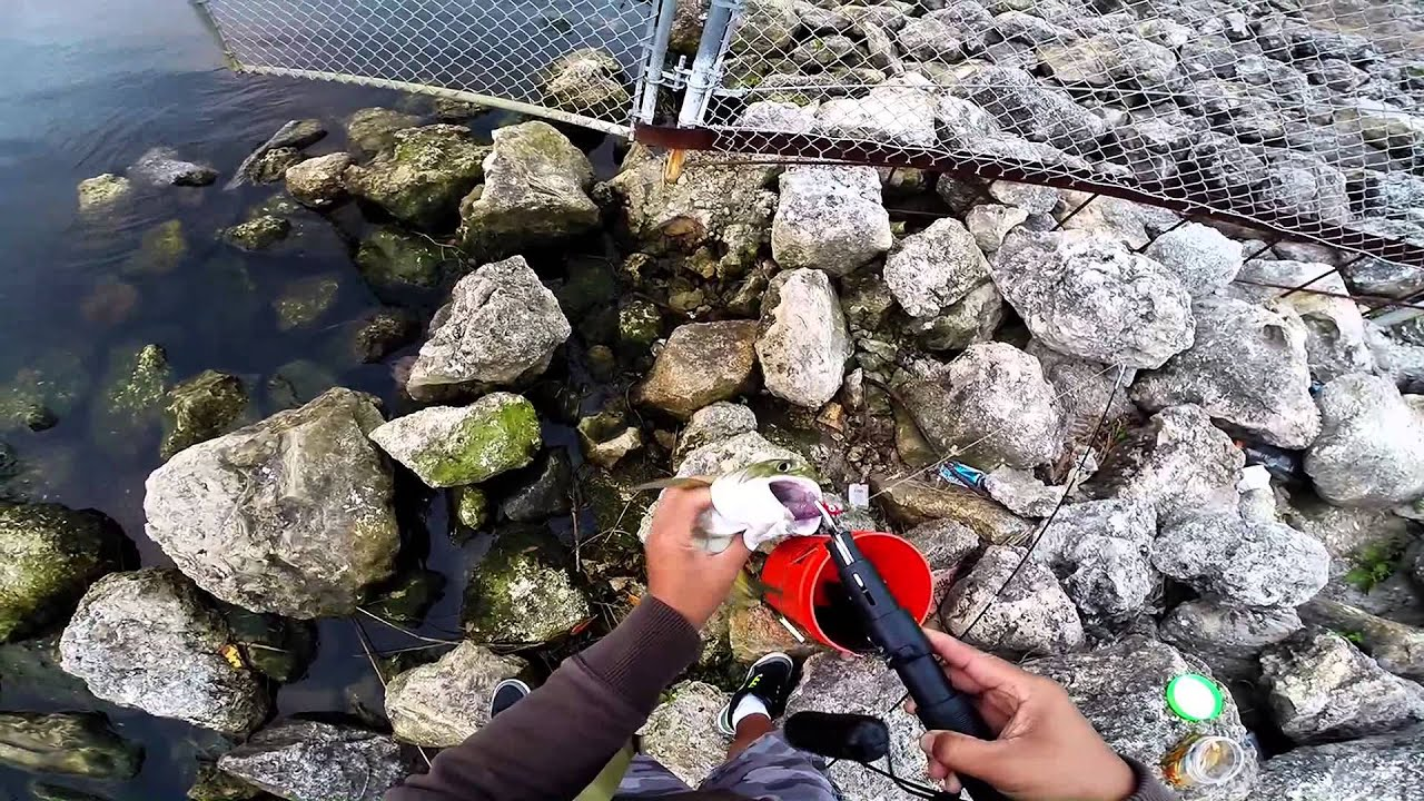 Spillway Fish pa Florida Spillway Fishing Using