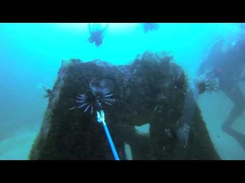 Florida American Fisheries Society Lionfish Video