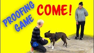 Come! - Recall proofing game from my seminar in Venice, Italy - Professional Dog Training