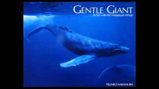 Gentle Giants Of The Sea Another Chance