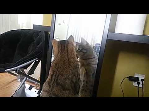 Kitty vs Mirror