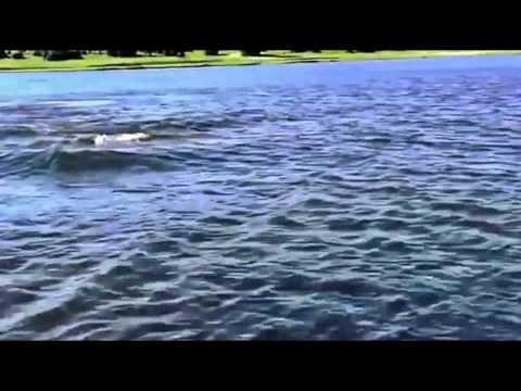 Mặt hồ đang yên ả thì bất ngờ NÓ...xuất hiện