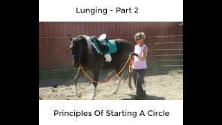 Lunging Part 2 - Principles Of Starting A Circle
