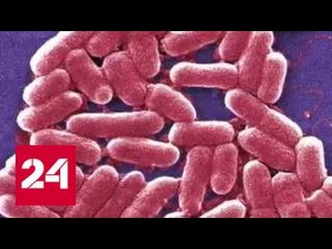 Американку убила супербактерия, устойчивая к 26 антибиотикам thumbnail