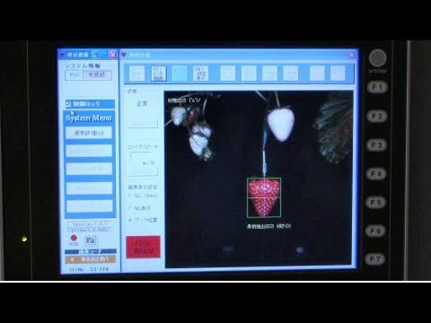 Strawberry Picking Robot : DigInfo