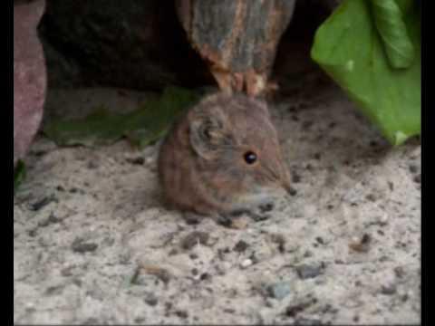 Cute but dangerous animal