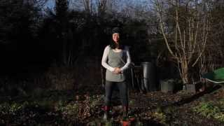 Allotment Qigong