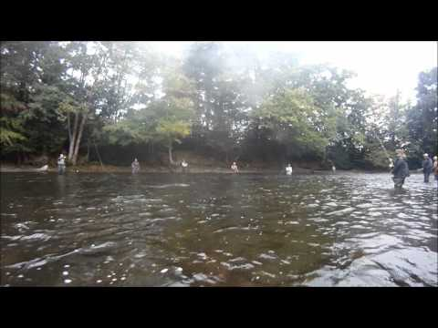 Fly Fishing Salmon River Pulaski NY (GoPro)