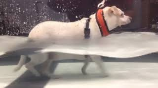 Bianca Dellerson Underwater Treadmill 12/14/18
