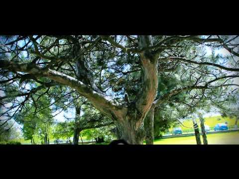 Sonerie telefon » Liliana – Dragostea pentru tine (Video Oficial)