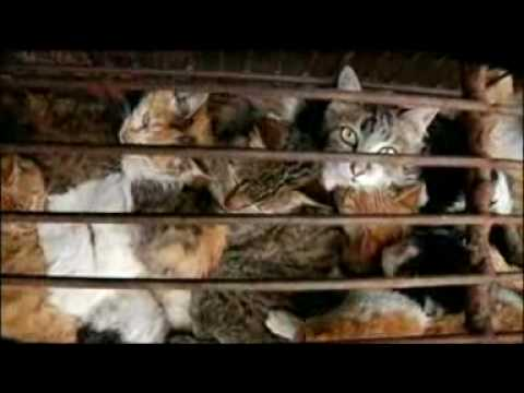 Against Cat Meat Trade in China