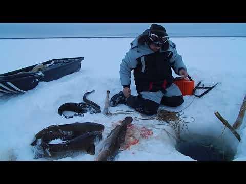 Рыбалка Сегодня.29.11.2017г.