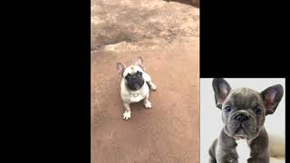 My funny dog - funny Cats and Dogs videos compilation #2