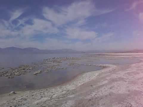 Salt creek campground at the salton sea state recreation for Salton sea fishing report