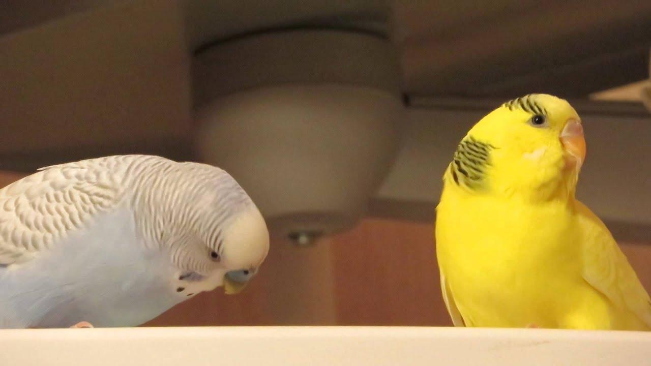 Смотри фото секс валнистава попугая 10 фотография