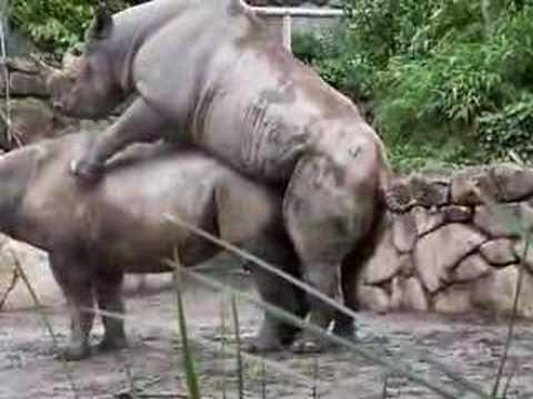 上野動物公園で...