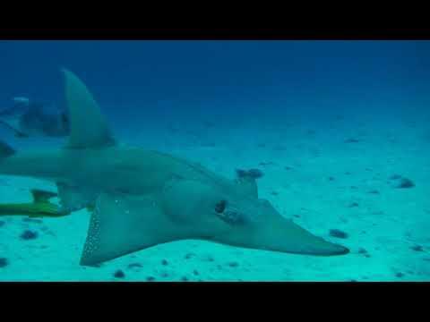 1000002488 hn11902 gs080207 malediven meer karibik fische unterwasser Clip 417 meer,hai,fische | footage