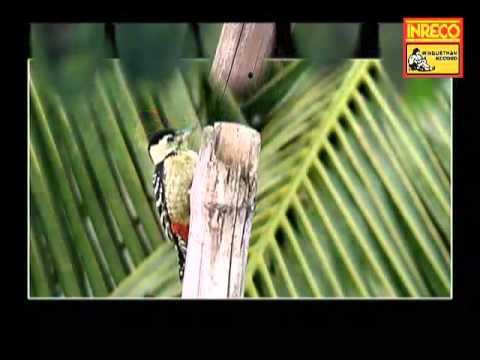 Pakhi Tui Thik Bosey Thak - Hiralal Sarkhel