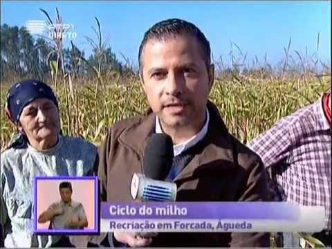 Reportagem RTP Pra�a da Alegria 03/10/12 - Forcada - Aguada de Cima - �gueda - Parte 2