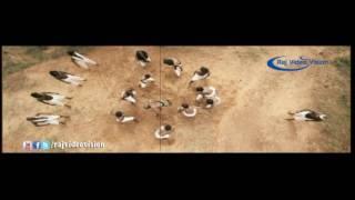 Theeparaka Song HD   Ilami