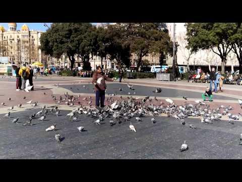 Htc One M9 4k Video Sample video