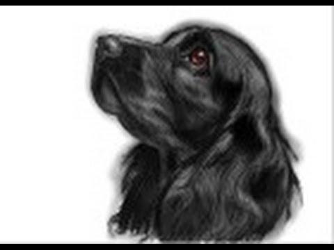 Видео как нарисовать спаниеля
